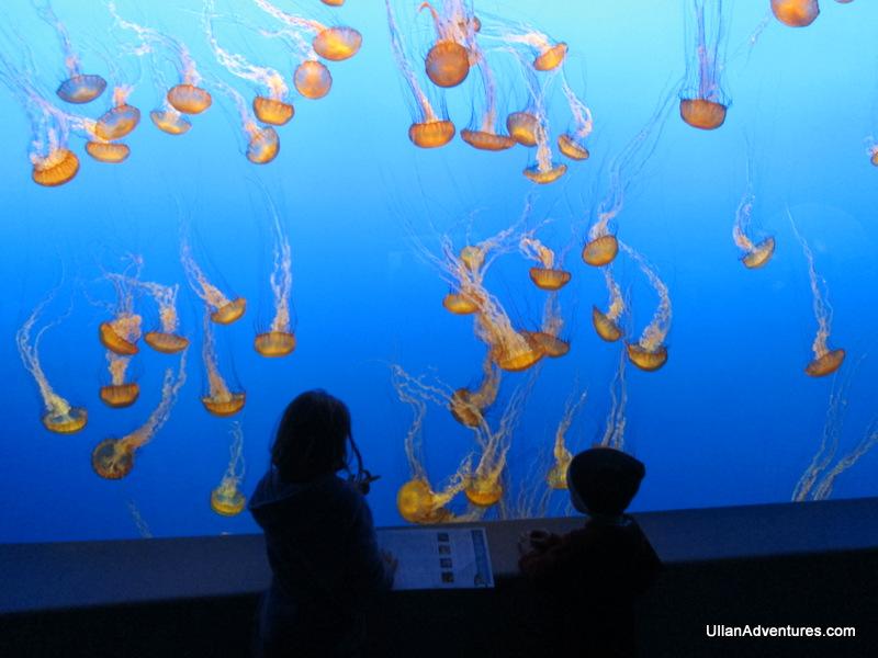 Jellyfish @ Monterrey Aquarium