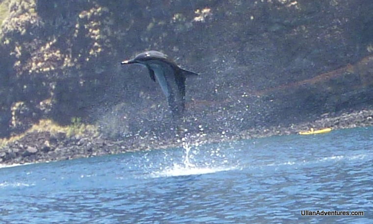 dolphincrop