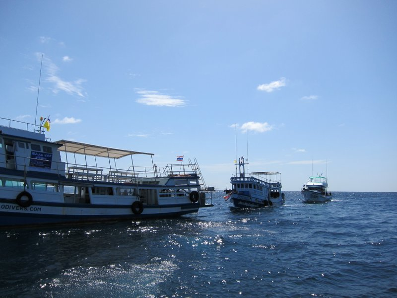 Lots of dive boats