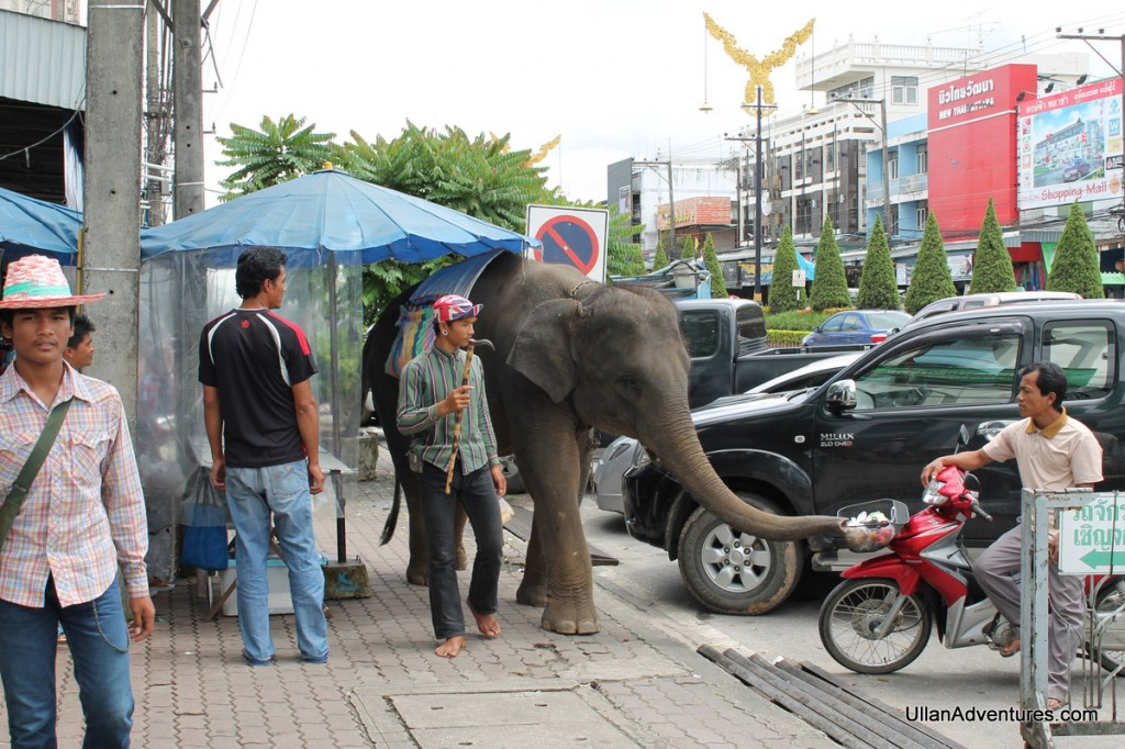 Its not every day you see an elephant walking down the street