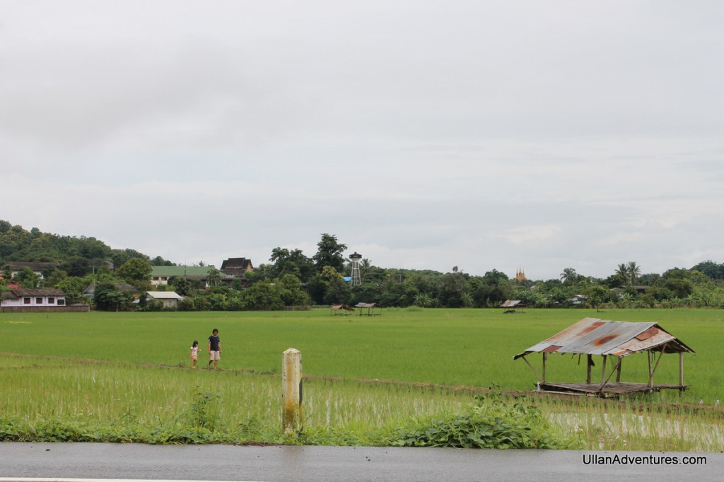 Rice paddy in Northern Thailand