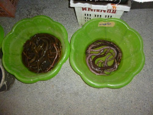 Snakes and eels