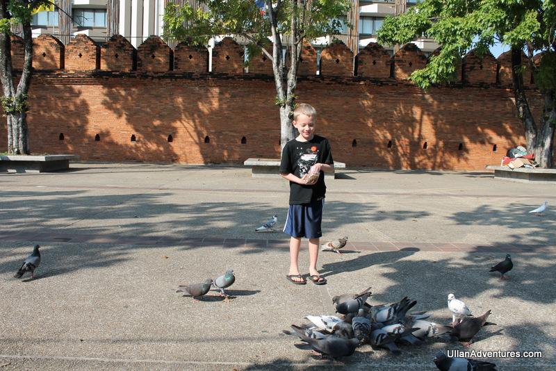 Feeding pigeons at Tha Pae Gate in Chiang Mai, Thailand