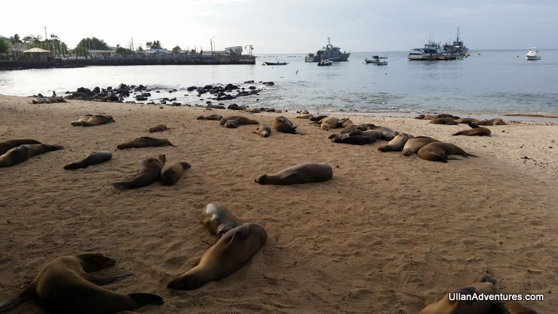 Sea Lions are everywhere
