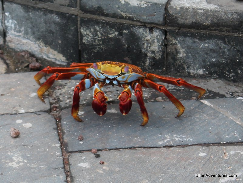 The crabs are very cool.