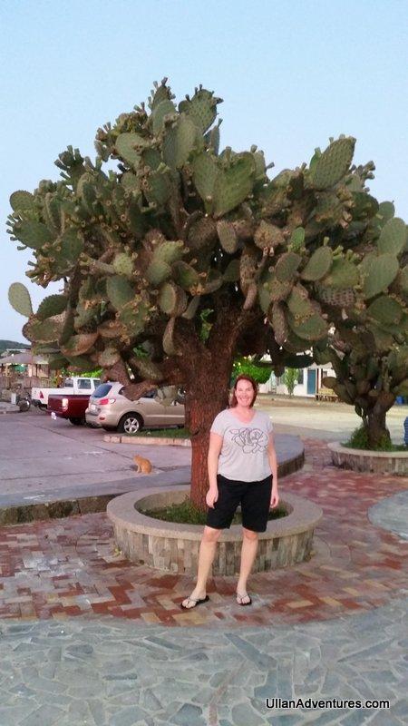 Cool Opuntia (cactus tree)