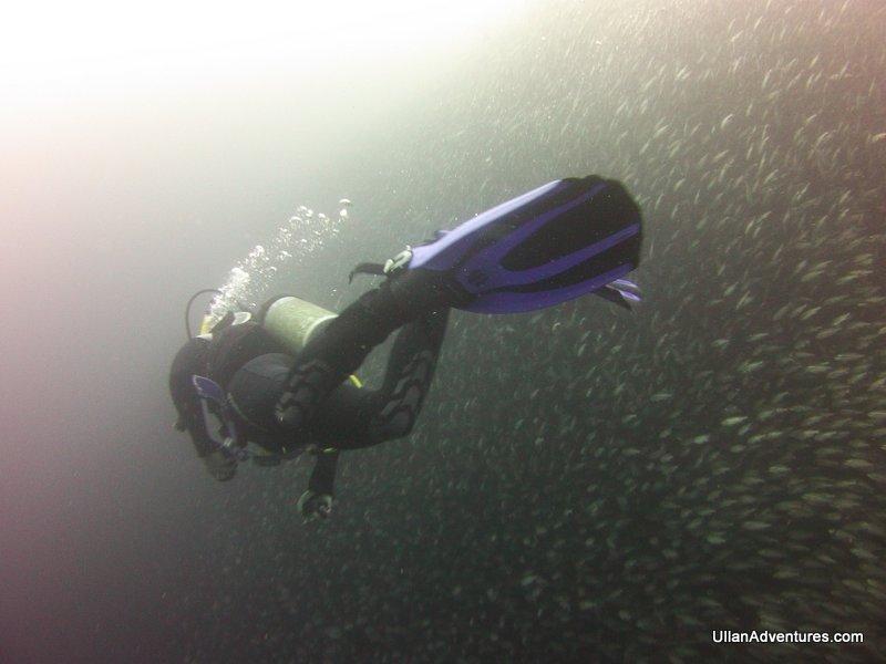 Skirting the outside of the giant bait ball